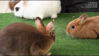 KRÓLIKI – Jakiej rasy jest ten królik? I cz.