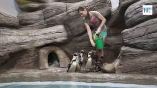 Кормление пингвинов в зоопарке
