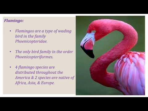 Day out 1# Ras Al Khor Flamingo # Dubai