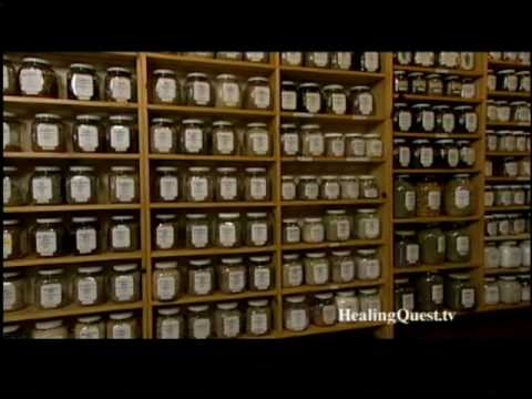Healing Quest: Herbal Insight - Chamomile
