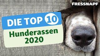 Top 10 Hunderassen (2020)  Die beliebtesten Hunde der Deutschen