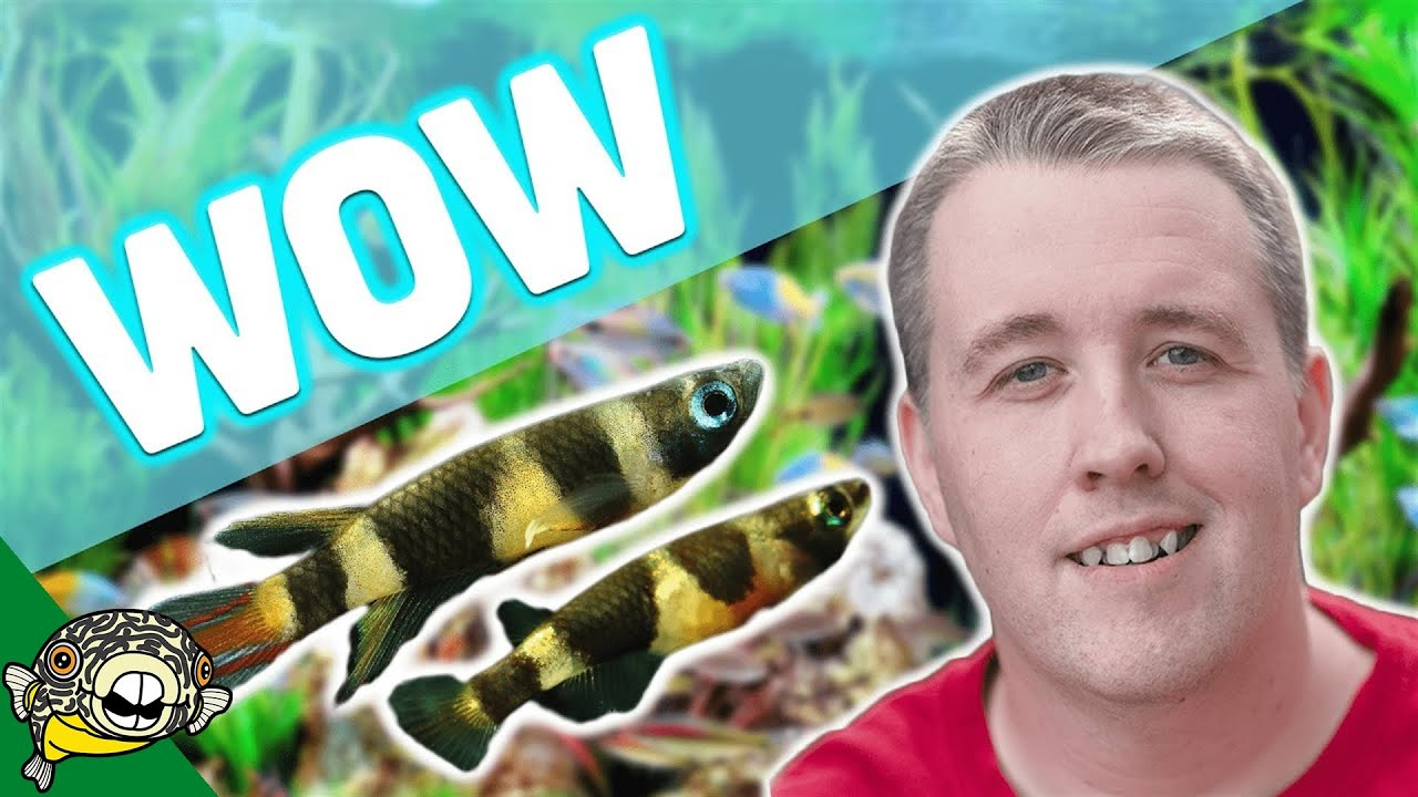 No water changes tropical fish store tour over 25 years for 1 fish 2 fish store