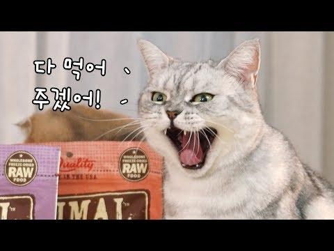 푸드파이터 고양이 수리 - 금사료미식회 꿀잼