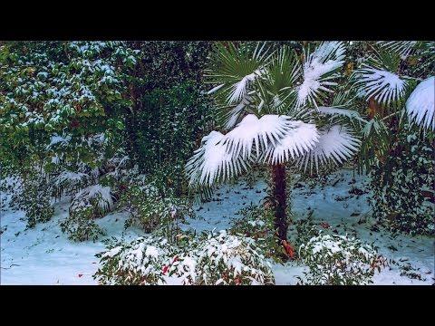 Вопрос: В какой грунт посадить искусственную пальму?