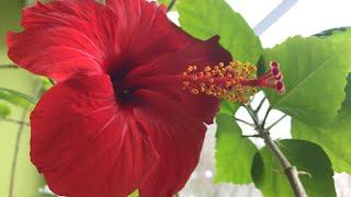 Комнатные цветы в Марте