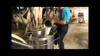 Die Amisch - Eine Kurzdokumentation