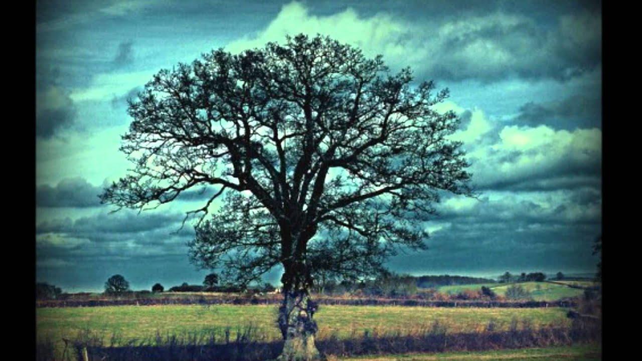 L 39 arbre aux souhaits youtube - L arbre a souhait ...