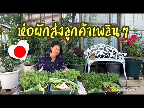 ห่อผักส่งลูกค้าเพลินๆ ผักปลอดสาร ผักไทยปลูกในญี่ปุ่น - วันที่ 09 Aug 2019