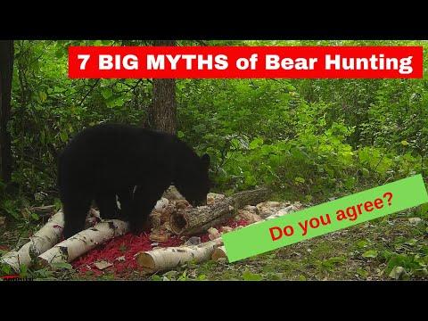 7 BIG MYTHS Of Bear Hunting