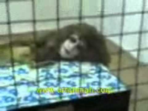 Animal with human head!.3gp