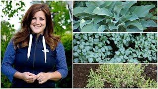 Dividing Perennials // Garden Answer