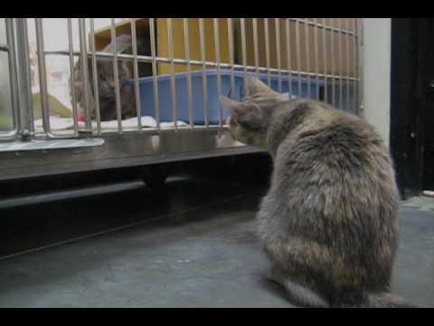 Humane Society Cats Youtube