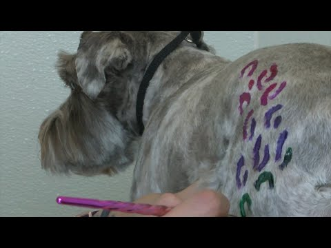 New 'creative grooming' business specializes in bright colors, wild prints for dogs