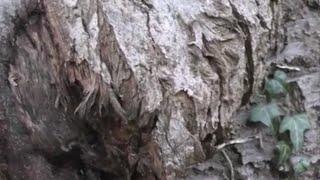 RAAD-VIDEO Lemelerveld [13] Hoeveel seconden moet u bomen?