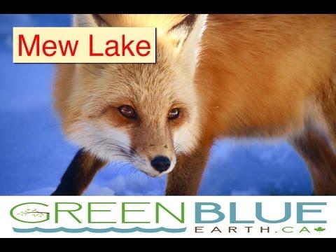 Algonquin Park Mew Lake Camping