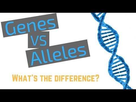 Genes vs Alleles