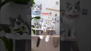 TIKTOK REMIT 1:How cute can the pet be. 抖音剪辑:宠物篇