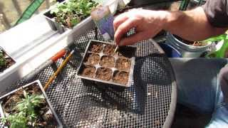 How and When to Start Lavender Indoors: Takes a Long Time to Germinate - The Rusted Garden 2014