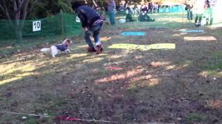 2012年イヌリンピック☆我が家のアスリート犬コニーが頑張りました^_^