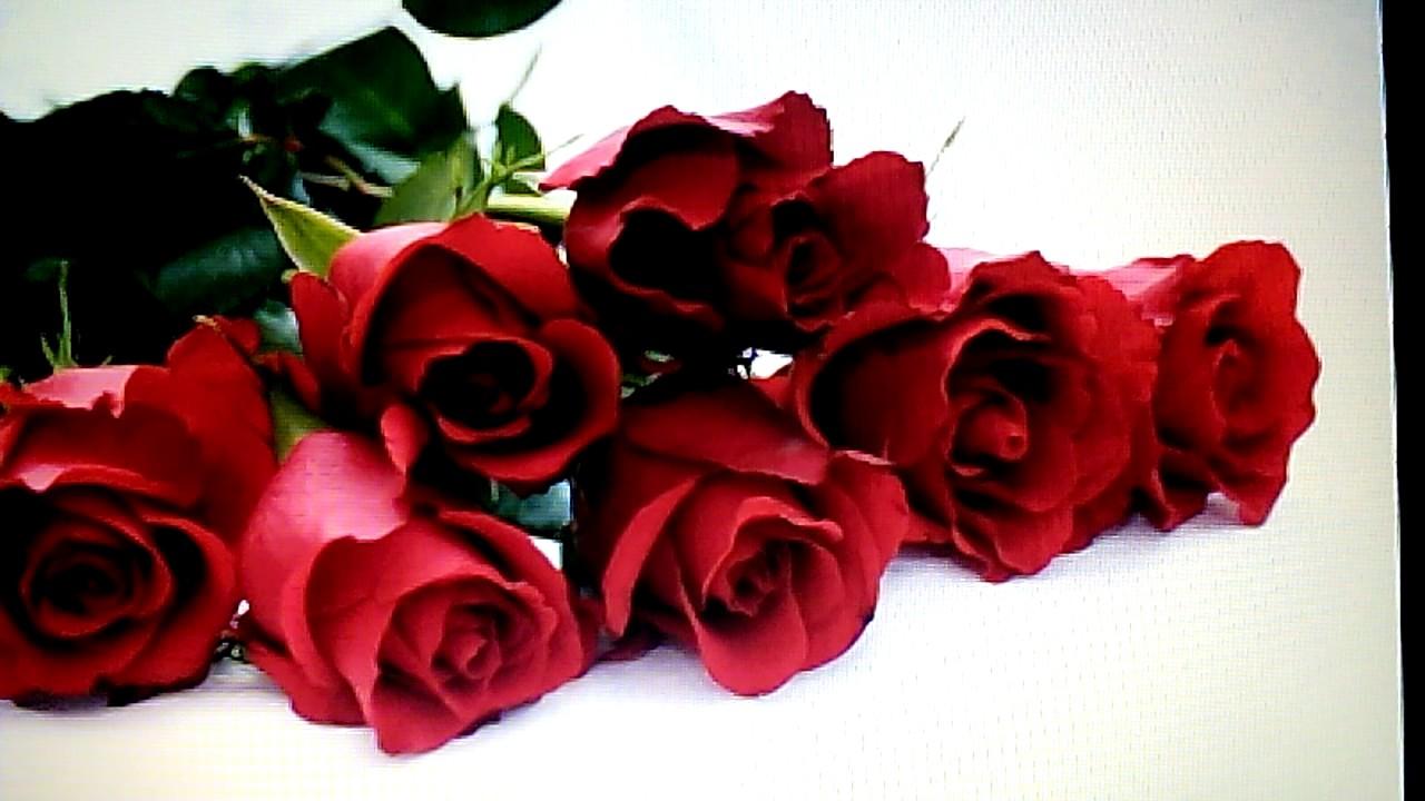 parmi les plus belles roses youtube. Black Bedroom Furniture Sets. Home Design Ideas