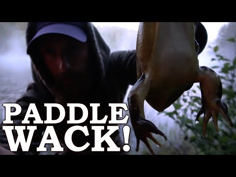 PADDLE SWATTING BULLFROGS (Hilarious!!!) | Catch And Cook On A ROCK!  Canadian Wild Tour Ep1