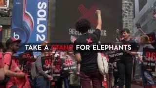 Times Square Ivory Crush | 96 Elephants