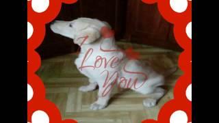 Клип собачка любимая