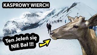 Kolejką na Kasprowy Wierch !!! - Szalony Jeleń i wylana Zupa w Przyczepie Kempingowej (Vlog #279)