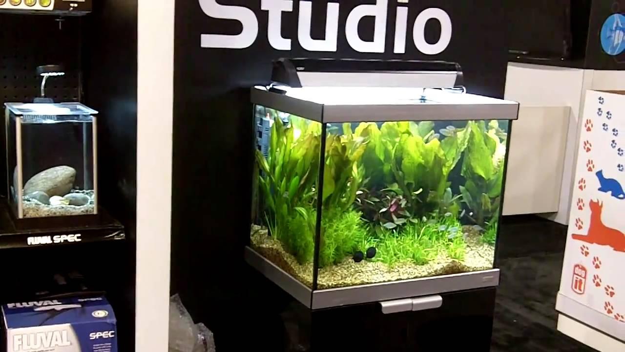 aquarium studio