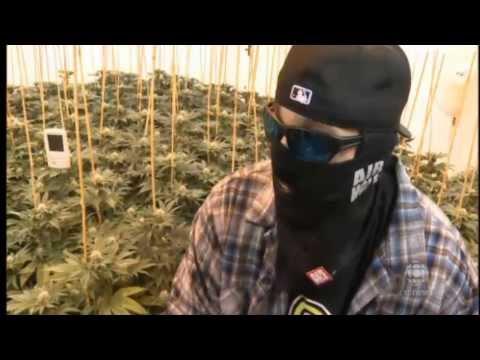 Canada Medical Marijuana turn into 1.4$ Billion Business