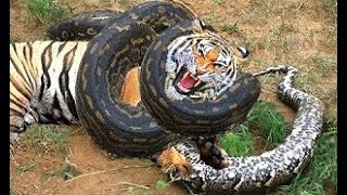 10 Real Extreme Animal Fights Caught On Camera - Craziest Animals Attack