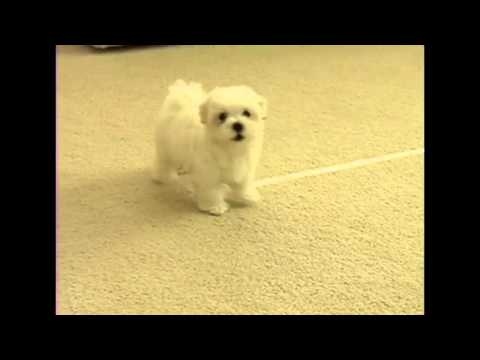 Borgore & Dotcom feat. ShayGray - Nope (Maltese puppy remix)