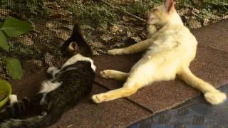 Kucing Mandi Bersama