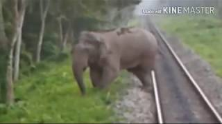 LARGE ELEPHANT STOPS TRAIN & TRIES TO PUSH IT