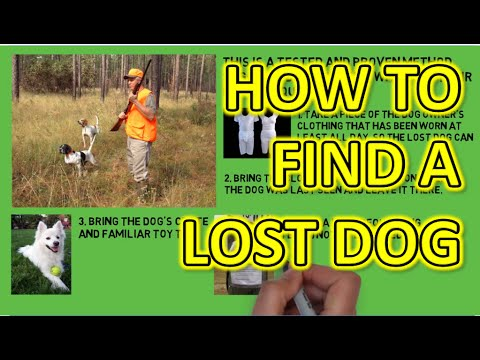 Lost Dog Rescue - How To Find A Lost Dog