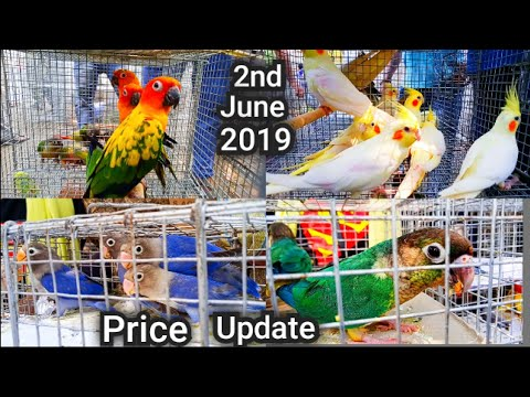 kolkata-bird-market-at-galiff-street-price-update-2nd-june-2019