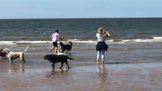 Dogs playing football at the beach - Dog Home Boarding at Playful Paws Petcare