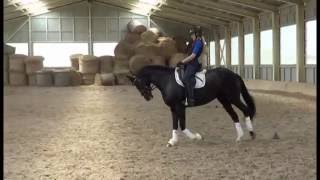 bretane iii mg dressage mare 4 yo for sale