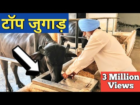 किसान ने लगाये ऐसे जुगाड़ सब हैरान  Automatic water bowl Gobar gas plant Dairy Farm india