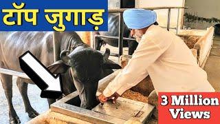 ऐसे जुगाड़ नहीं देखे होंगे|Automatic water bowl|Gobar gas plant|Dairy Farming desi jugaad