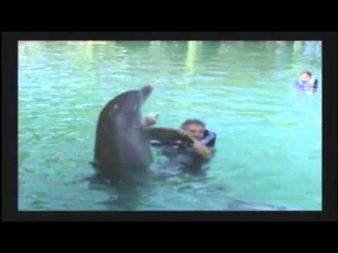 Dolphin Encounter at The Blue Lagoon in Nassau Bahamas