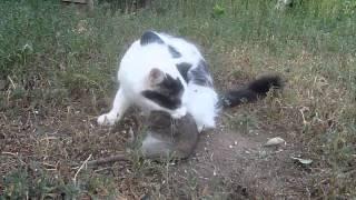 Кошка и крыса.