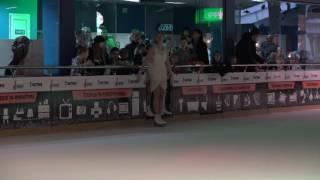 Новогоднее шоу на льду (фигурное катание, 18.12.2016)