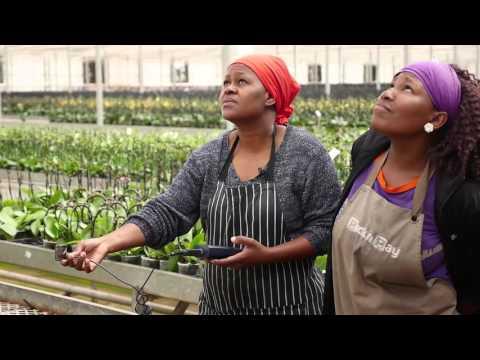 SUNREF – Encouraging green energies in South Africa