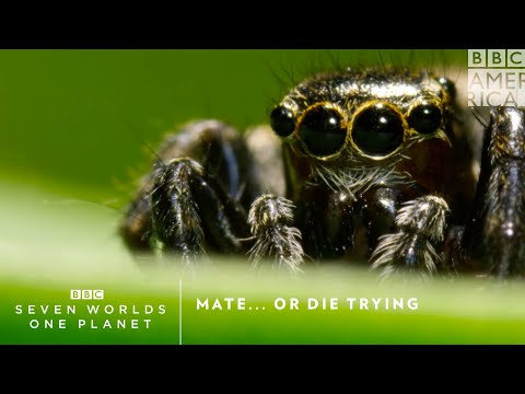 Mate...Or Die Trying | Seven Worlds, One Planet | Saturdays at 9pm | BBC America