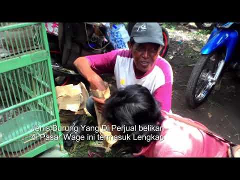 Hebohnya Pasar Burung & Ayam Aduan Tradisional Wage Pedan Klaten