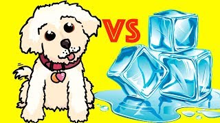 PUPPY VS ICE CUBES!!
