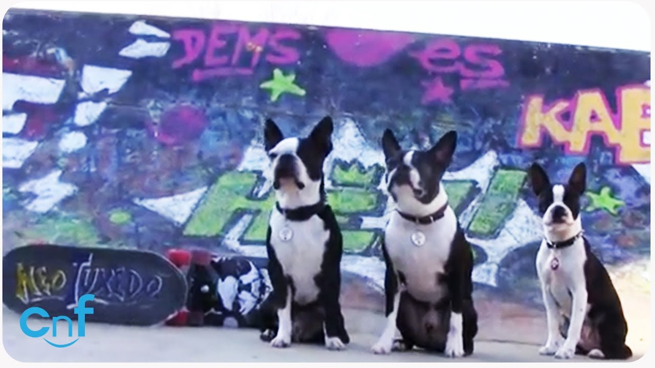 Cute Skater Dogs at the Skate Park