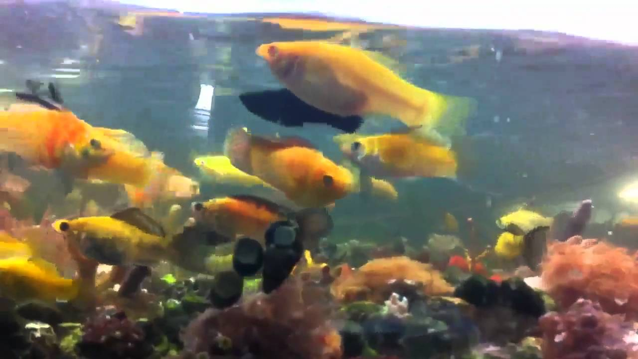 Make Your Own Fish Food Saltwater