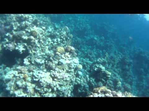 Egypt - Sharm el Sheikh - Ras Um el Sid - hotel Iberotel Fanara